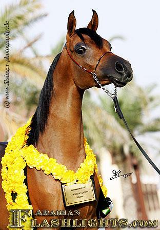 Arabianflashlights Com Filcoart