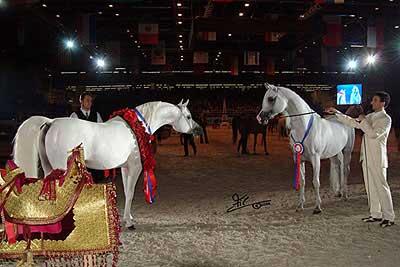 2004 salon du cheval paris world championships france. Black Bedroom Furniture Sets. Home Design Ideas